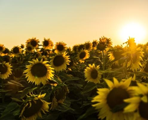 Hoe kies je een goede installateur voor zonnepanelen